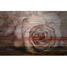 Parvez Taj Sleeping Rose - on Aluminum